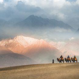 Camel safari Ride caravan in Hunder desert , Nubra valley , Leh Ladakh India
